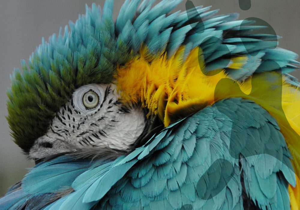 world-of-macaws-blue-and-gold-header